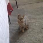 Coco the Cat!!